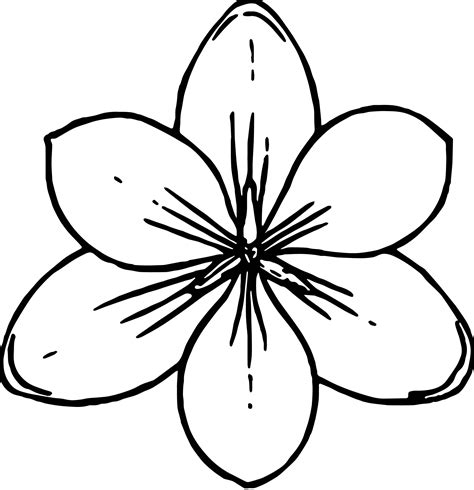 crocus flower coloring page crocus flower top view coloring page wecoloringpage