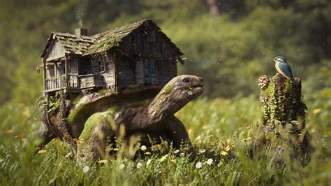 Turtle House And Bird 3000 X 2000 Fantasy Photography Miriadna Com