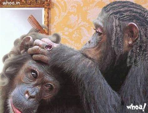 funny monkeys wallpaper  facebook