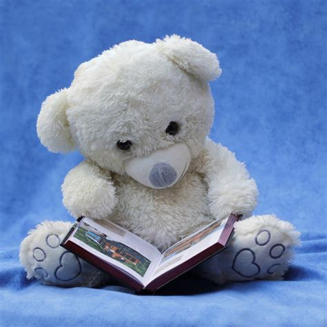 white teddy bear with opened book photo 183 free stock photo