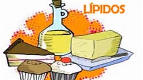 proteinas y lipidos digesti 243 n absorci 243 n carbohidratps l 237 pidos y prote 237 nas
