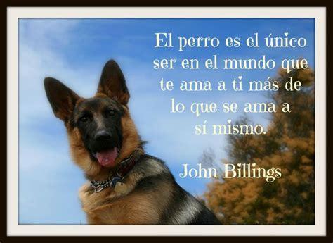 imagenes para reflexionar de animales originales frases bonitas sobre perros para reflexionar