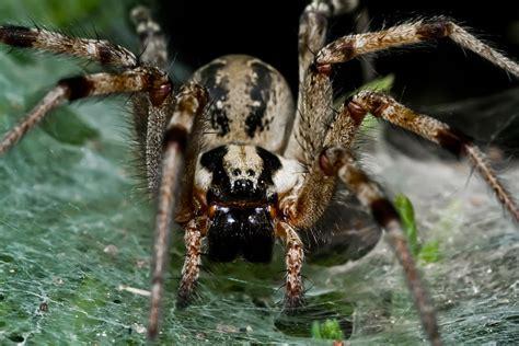 puppy spider spider puppy photograph by richarquis de sade