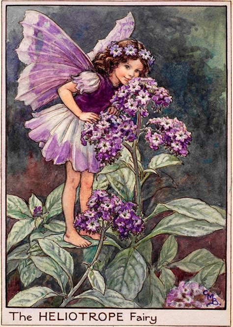 Flower Fairies Of The Garden The Heliotrope Flower Fairies