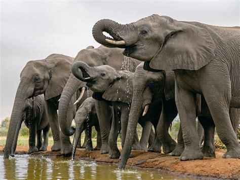 National Geographic Wildlife 5 ways to see botswana s stunning wildlife nat geo