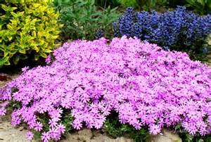 15 colorful perennials for shade northern nester