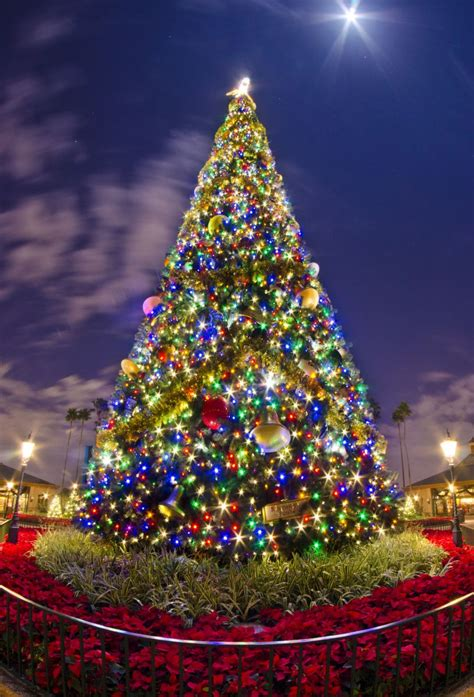 flordia xmas trees 10 of the best tree decorations