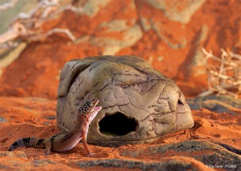 Exoterra Hiding Cave Medium M exo terra gecko cave terrestrial gecko hide medium livefood uk ltd