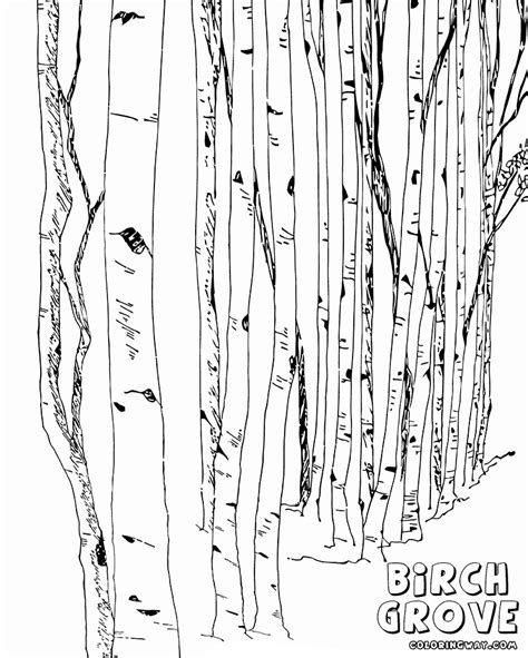 birch tree coloring page birch coloring pages coloring pages to download and print