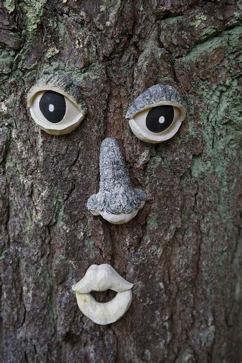 tree faces tree face photograph by allan morrison