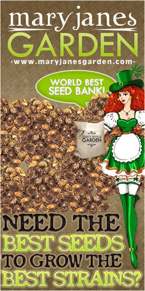 marijuana seed bank reviews marijuana seeds reviews marijuana seed bank ratings