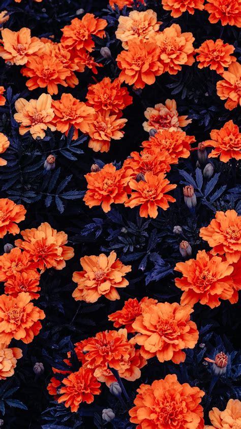 wallpaper orange flowers flower garden  linux stock