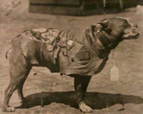 Rip Sgt Stubby L Histoire Incroyable Du Chien Stubby Pendant La Guerre
