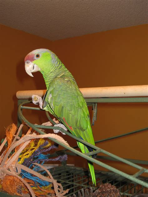 tucson parrot rescue about us