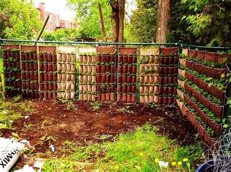 backyard growing system 25 best ideas about hydroponic strawberries on