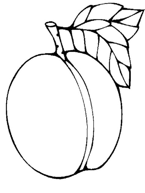 apricot coloring pages   print apricot