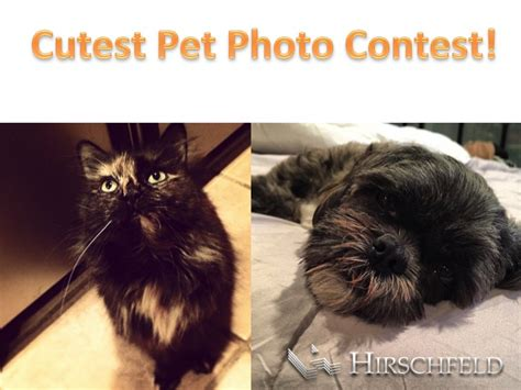 Hosting Photo Contest by Cutest Pet Photo Contest At Steeplechase Hirschfeld