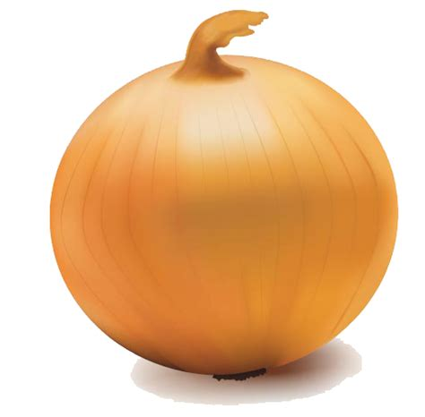 onion vector transparent png  transparent