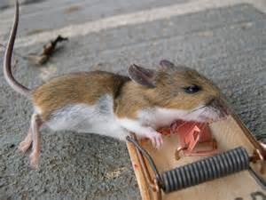 Dead Mouse Dead Mouse