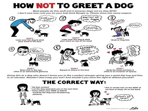 how to approach and not to approach a dog lolla and lilly