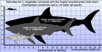 debunking the discovery myth megalodon is dead
