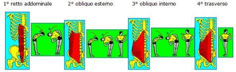 esercizi addominali obliqui interni varie tecnica il fulcro della corsa