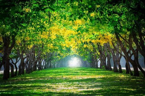 background green park london fresh and green beautiful of summer blooming yellow