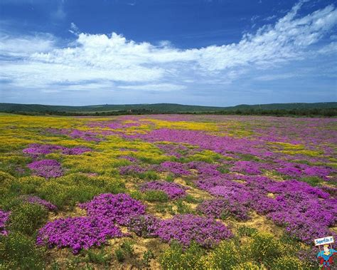 foto di prati fioriti foto prati fioriti 42 foto in alta definizione hd