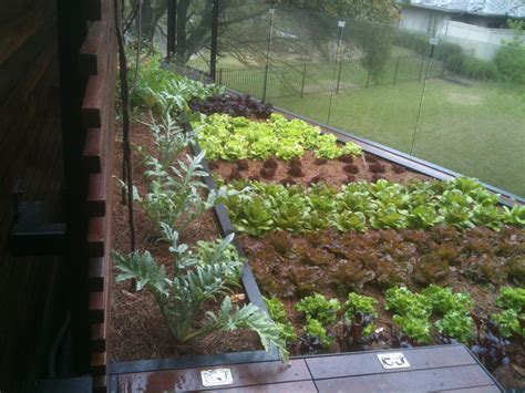 Edible Roof Vegetable Garden Peninsula Bcarc Com The Rooftop Vegetable Garden