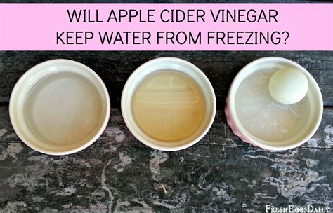 vinegar in s water does apple cider vinegar keep water from freezing fresh eggs daily 174