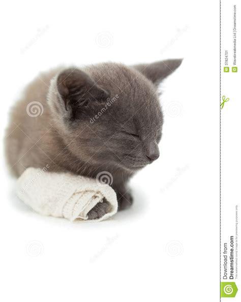 paw bandage grey kitten sleeping with a bandage on its paw stock image image 37824701