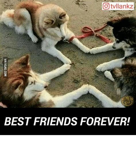 Friends Forever Meme - best friends forever meme www pixshark com images