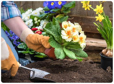how to garden flowers jobe s company