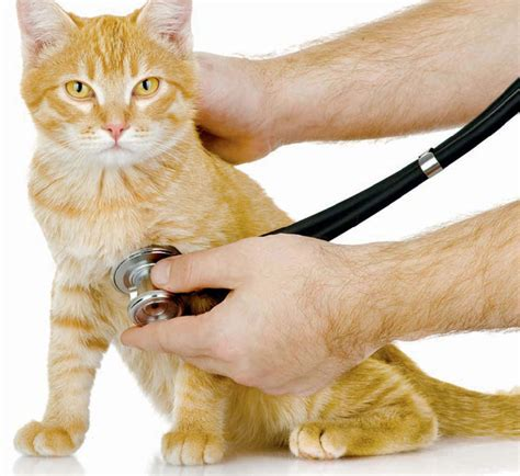 Cat Co Wellness Kitten 15kg how to give your cat a health check