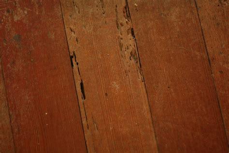 Termite Damage To Hardwood Floors termite damage on hardwood floors