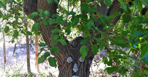 lots of life in one place permaculture tree mulberry