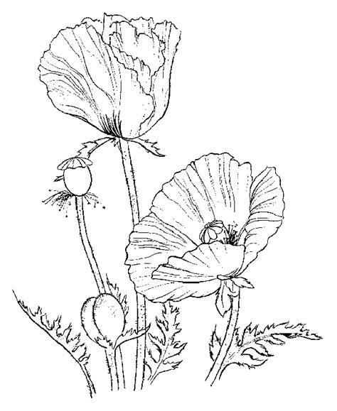 coloring pictures of iris flowers flower coloring pages iris flowers
