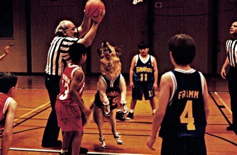 air bud golden retriever cineplex air bud a family favourites presentation
