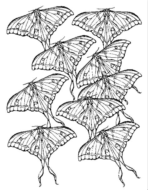 christian butterfly coloring pages butterfly butterfly coloring pages 107 coloring pages