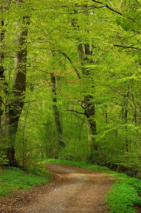 lush green forest path sunny wallpapers lush green landscape road park green forest path foliage