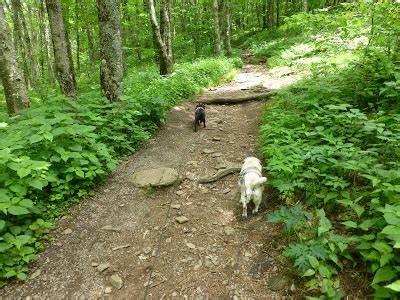 blue ridge pugs blue ridge parkway hike craggy gardens trail