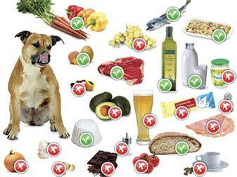 alimentazione boxer adulto allergia alimentare nel cause e alimenti corretti