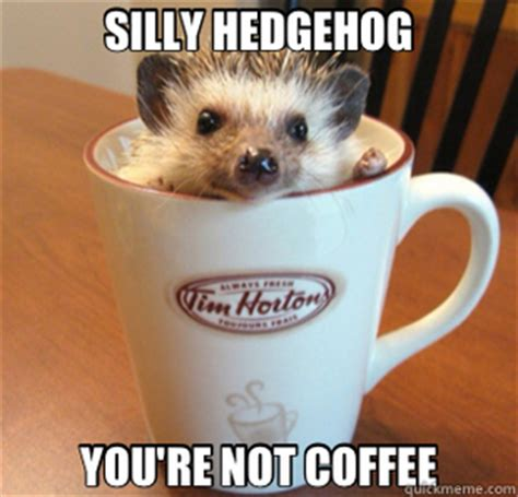 Silly Meme - 25 adorable hedgehog memes
