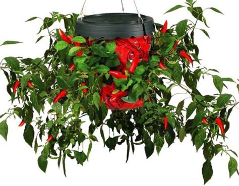 Pepper Planter by Pepper Micro Gardening The Topsy Turvy Pepper