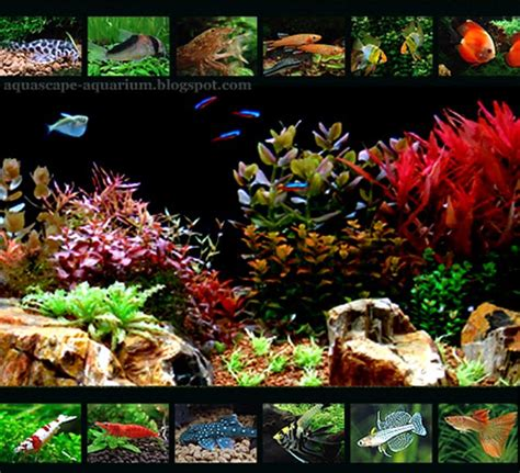 Types Of Aquarium by Aquarium May 2011