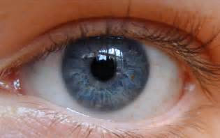 most common eye colors pentucket profile eye color