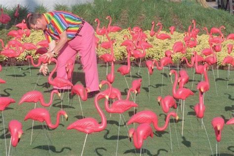 pink flamingos in the front yard yard of pink flamingos flamingos
