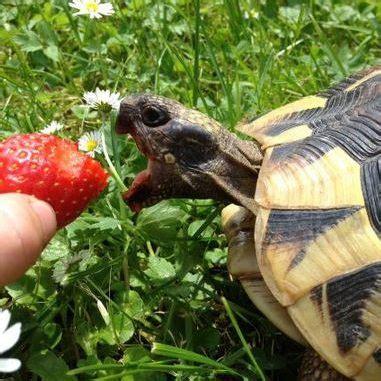 pet turtles eat   turtles eat