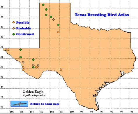 golden texas map golden eagle the texas bird atlas
