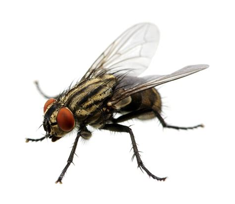 uncovered food with flies